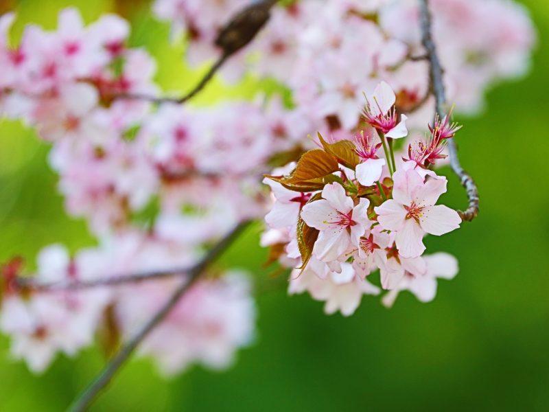 春が来た~!