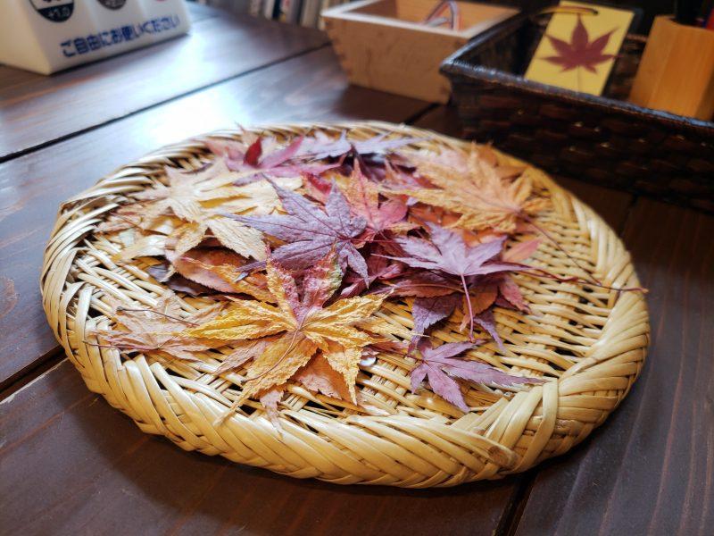 秋を綴じませんか