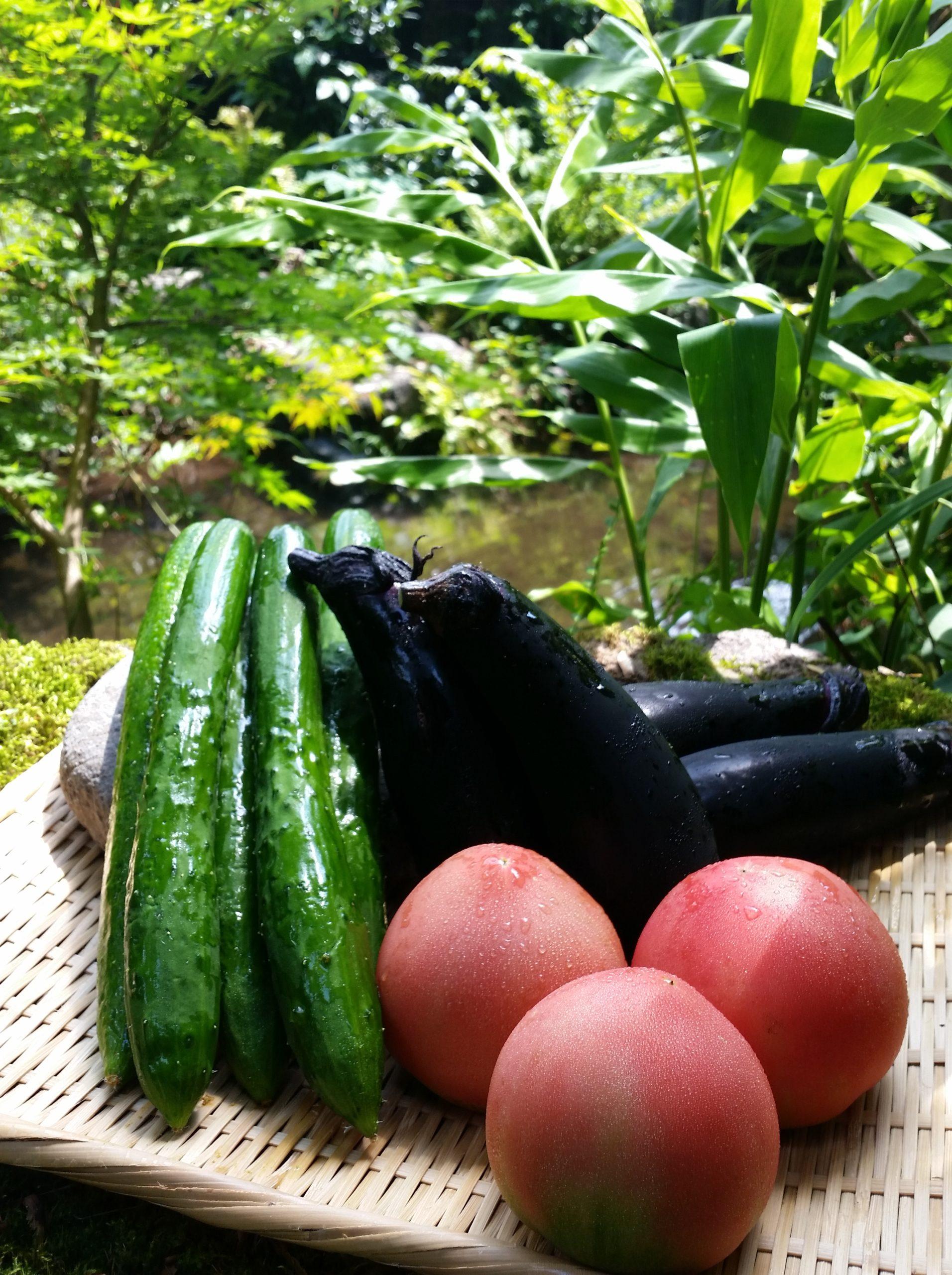 美味しいお野菜届いてます!