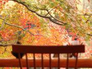 2010/11/15 ロビーから見えるもみじ